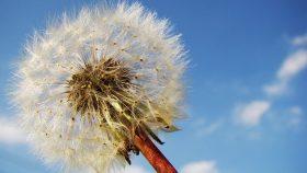 allergie - eternuement - rhume des foins - yeux qui pleurent - Soizic FERLAY - Etiopathe - Chambery - Aix les bains - Challes - Montmélian - Pontcharra